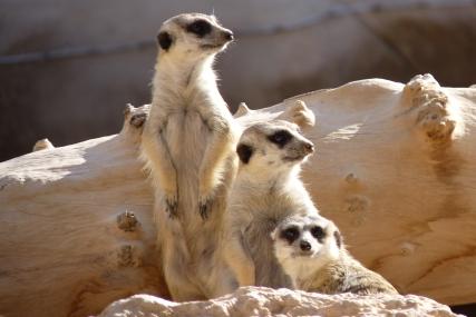 Zoo Al Aïn